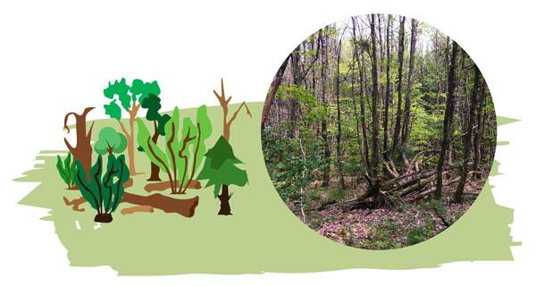 valorisation des forêts privées